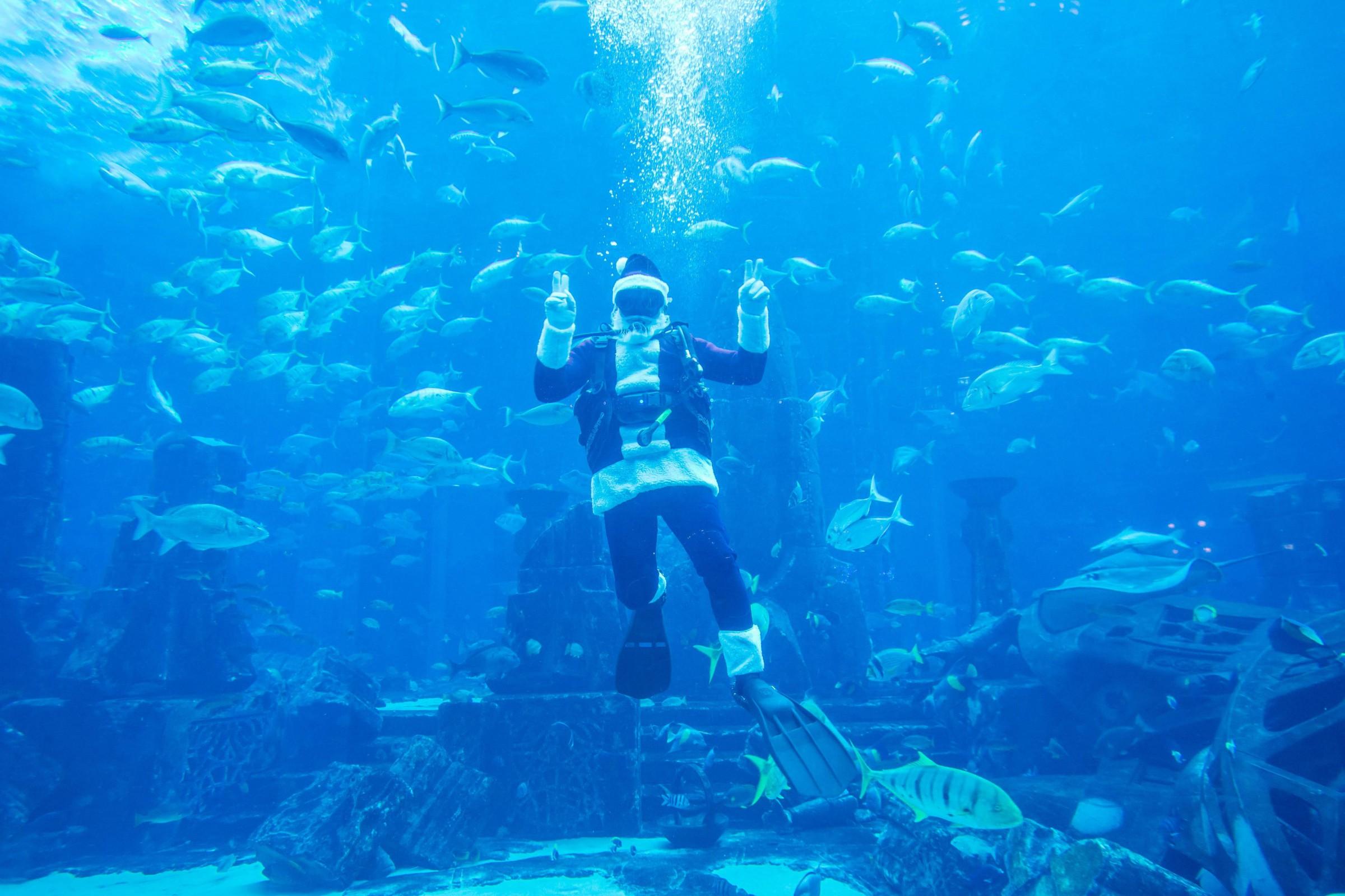 壁纸 海底 海底世界 海洋馆 水族馆 桌面 2400_1600